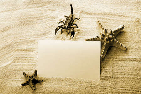 Frame from holidays & Scorpion Stock Photo - 3494116