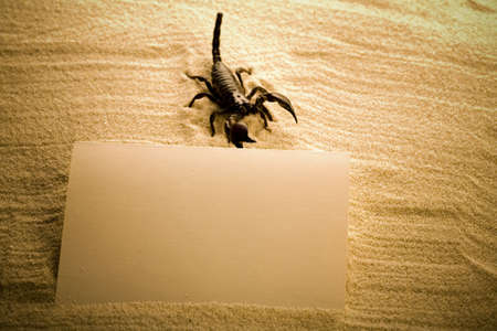 Paper background and Scorpion  photo