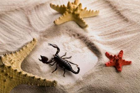 Sand and seashells frame & Scorpion  photo