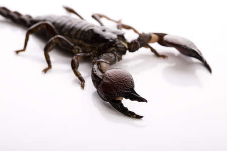 Scorpion background with path  photo