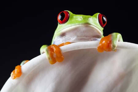 lean over: Red frog