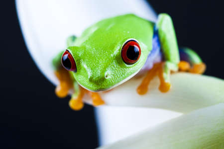 Green frog photo