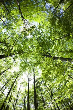 elusive: Forest landscape Stock Photo