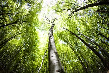 ecosistema: Bosque Foto de archivo
