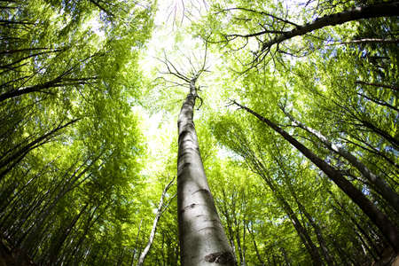 deciduous forest: Forest
