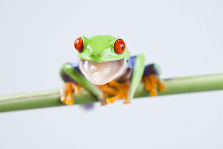 lean over: Frog Stock Photo