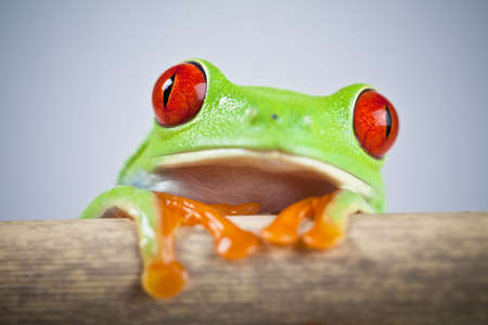 Green frog Stock Photo - 5094858