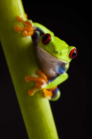 blue frog: Green frog Stock Photo