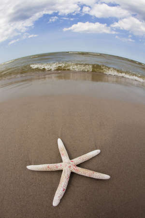 Seastar Stock Photo - 5428884
