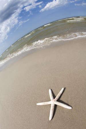 seastar: Sandy background, beach, seastar