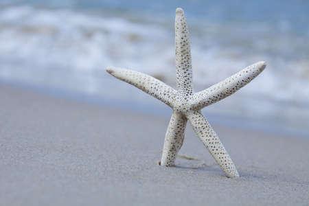 seastar: Seastar on a beach  Stock Photo