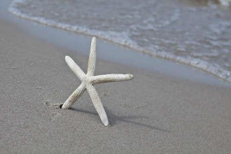 seastar: Seastar  Stock Photo
