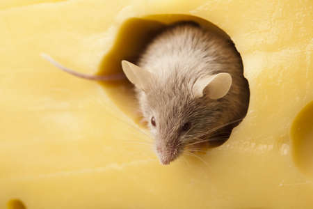 inducement: Mouse