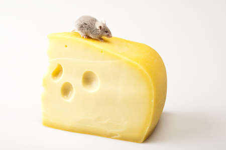 inducement: Funny rat