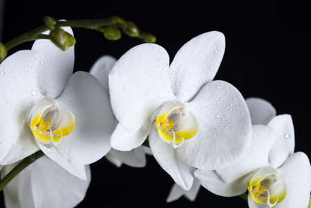 Orchids Stock Photo - 5742220