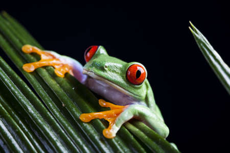 lean over: Animal Stock Photo