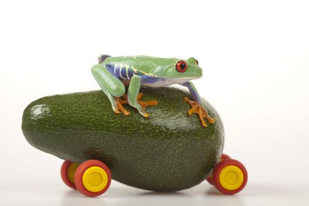 lean out: Fruit frog