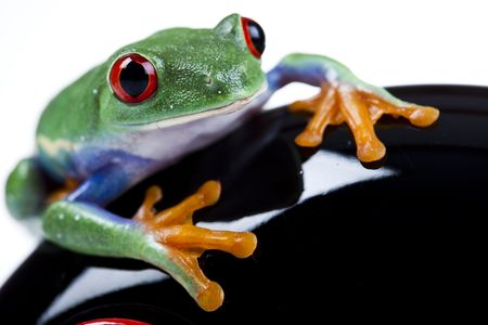 lean out: Frog Stock Photo