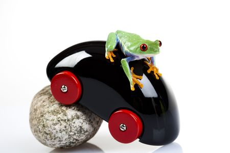 Frog on toy        photo