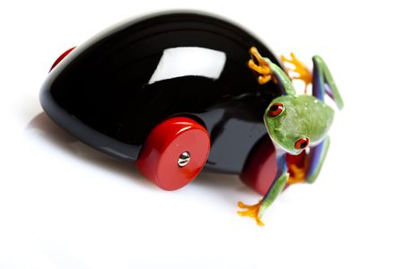 lean out: Frog on wooden toy car  Stock Photo