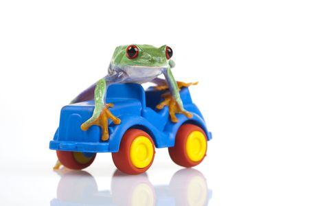 Driver frog Stock Photo - 6538835