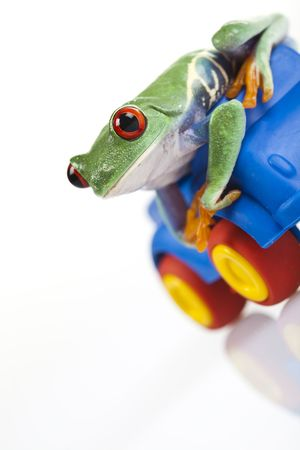 Frog on wooden toy car photo