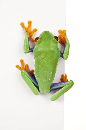 lean out: Frog frame