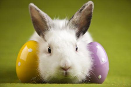 Rabbit Stock Photo - 6539130