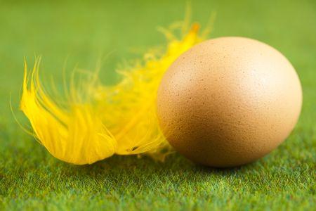 Egg Stock Photo - 6540440
