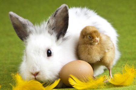 動物のイースター 写真素材