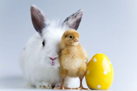 Rabbit on chick photo