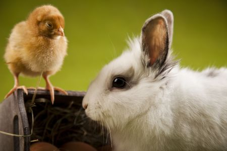 Bunny and chick Stock Photo - 6540315