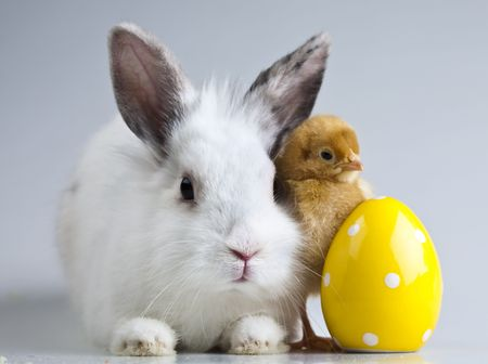 Bunny and chick photo