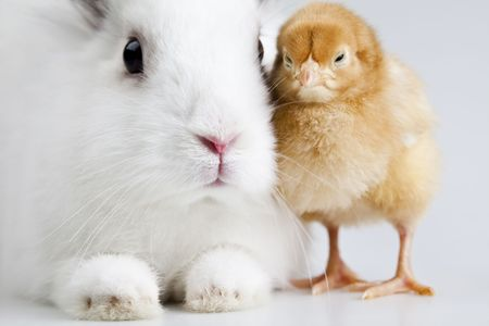 Animal easter  photo