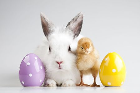 Happy Easter animal Stock Photo - 6539220