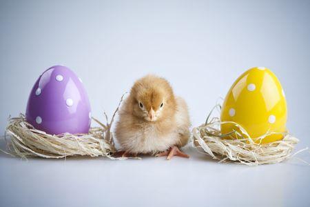 Chick Portrait photo