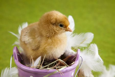 Easter animal photo
