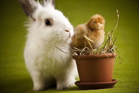 Chick and bunny Stock Photo - 6538937