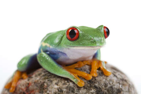 lean over: Green frog Stock Photo