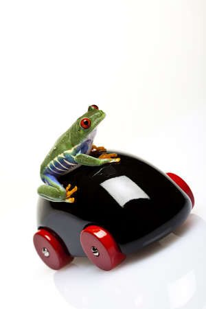 lean out: Green Frog  Stock Photo