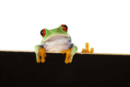 lean out: Frame animal, green frog