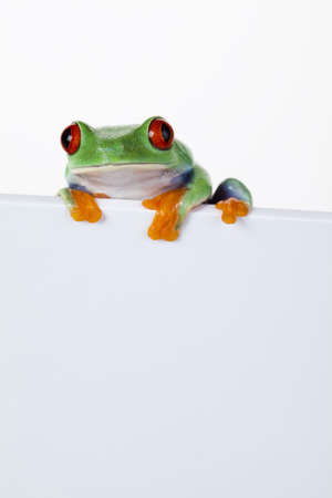 Frame animal, frog Stock Photo - 7382603