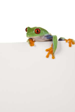 red frog: Frame animal, frog Stock Photo