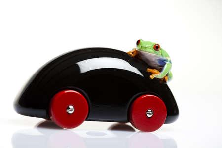 Green Frog driving! photo