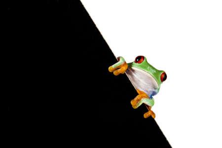Frog frame photo