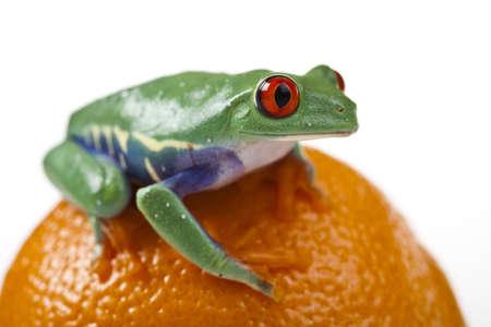 Orange frog Stock Photo - 7382584