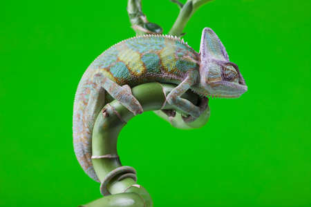 Green animal  Stok Fotoğraf