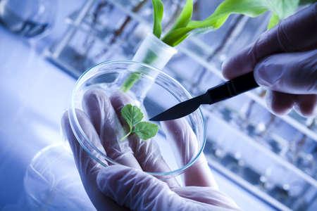 Eksperymentowanie z flory w laboratorium