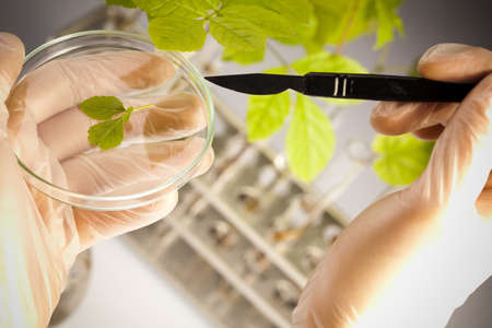 Floral science in blue laboratory  Stock Photo