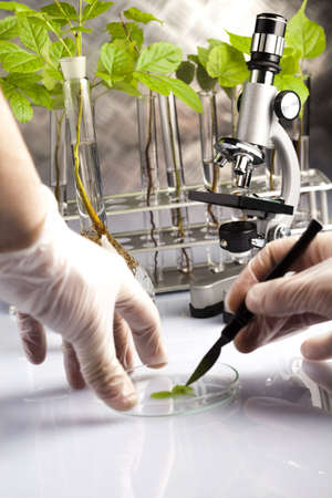 Plants  and laboratory  photo